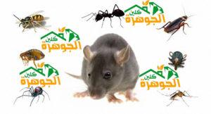 شركة مكافحة الحشرات بالمدينة المنورة